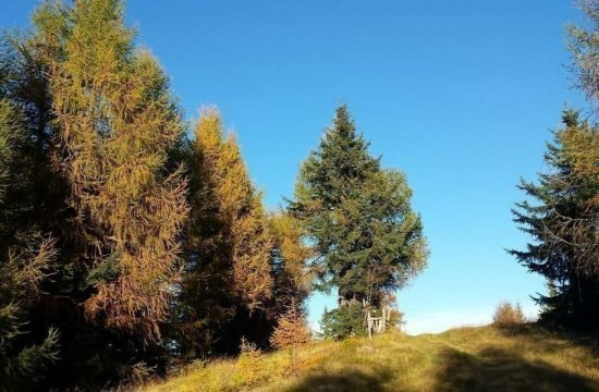 heiserhof-racines-val-giovo-alto-adige-30-1