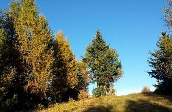 vacanza-sul-maso-racines-alto-adige (7)